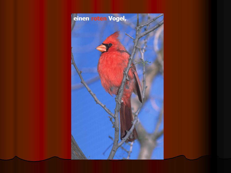 einen roten Vogel,