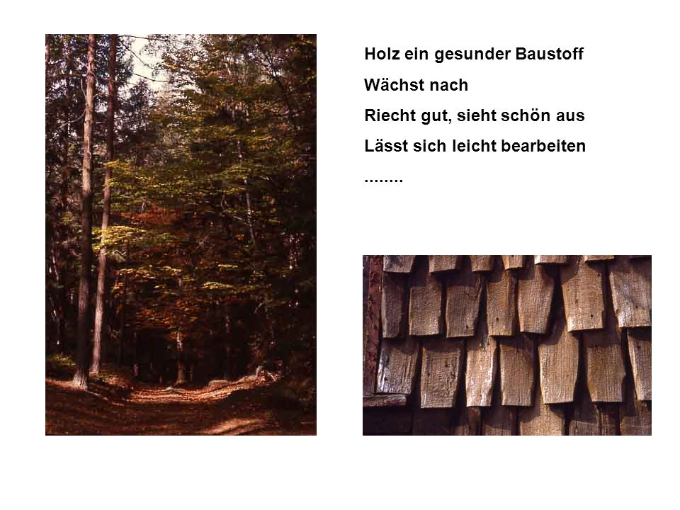 Holz ein gesunder Baustoff