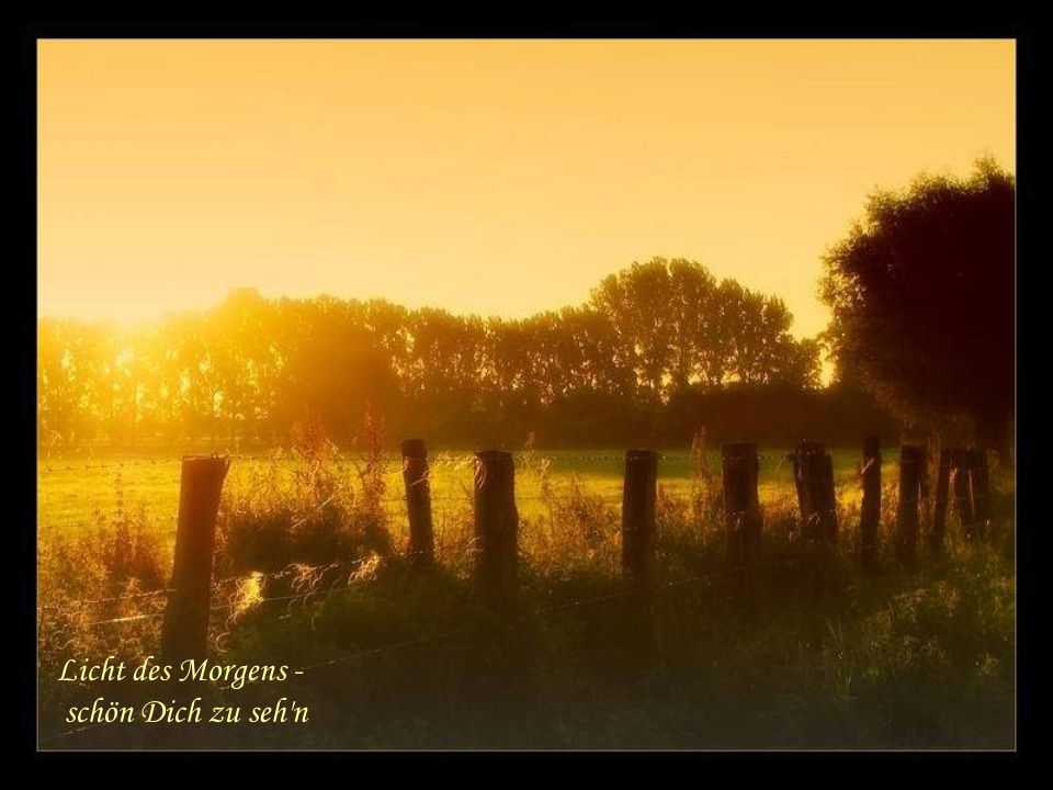 Licht des Morgens - schön Dich zu seh n
