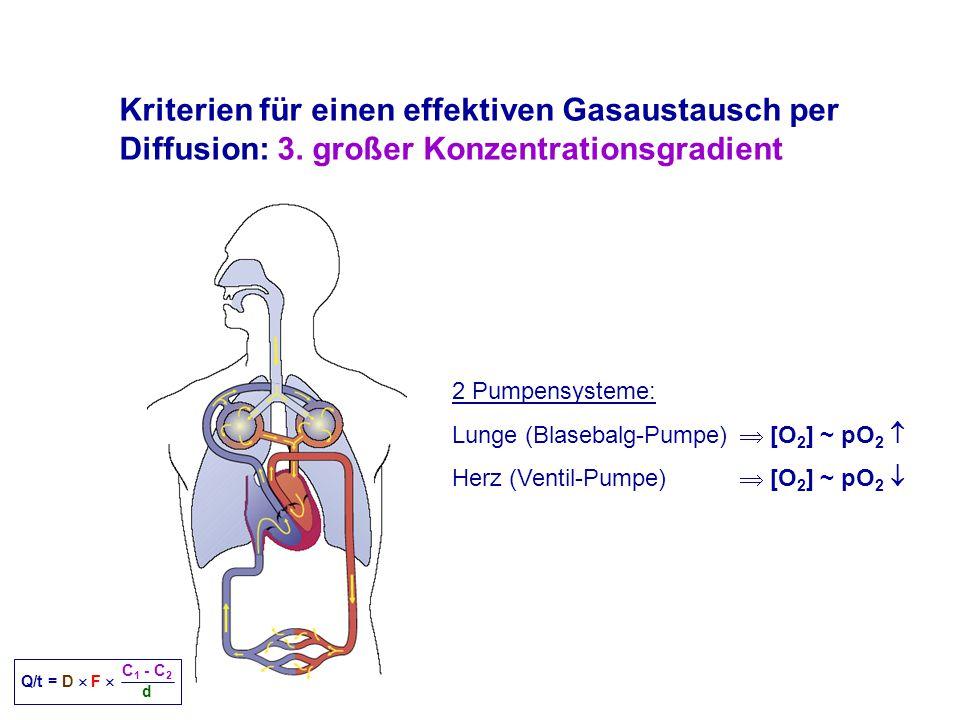 Kriterien für einen effektiven Gasaustausch per Diffusion: 3