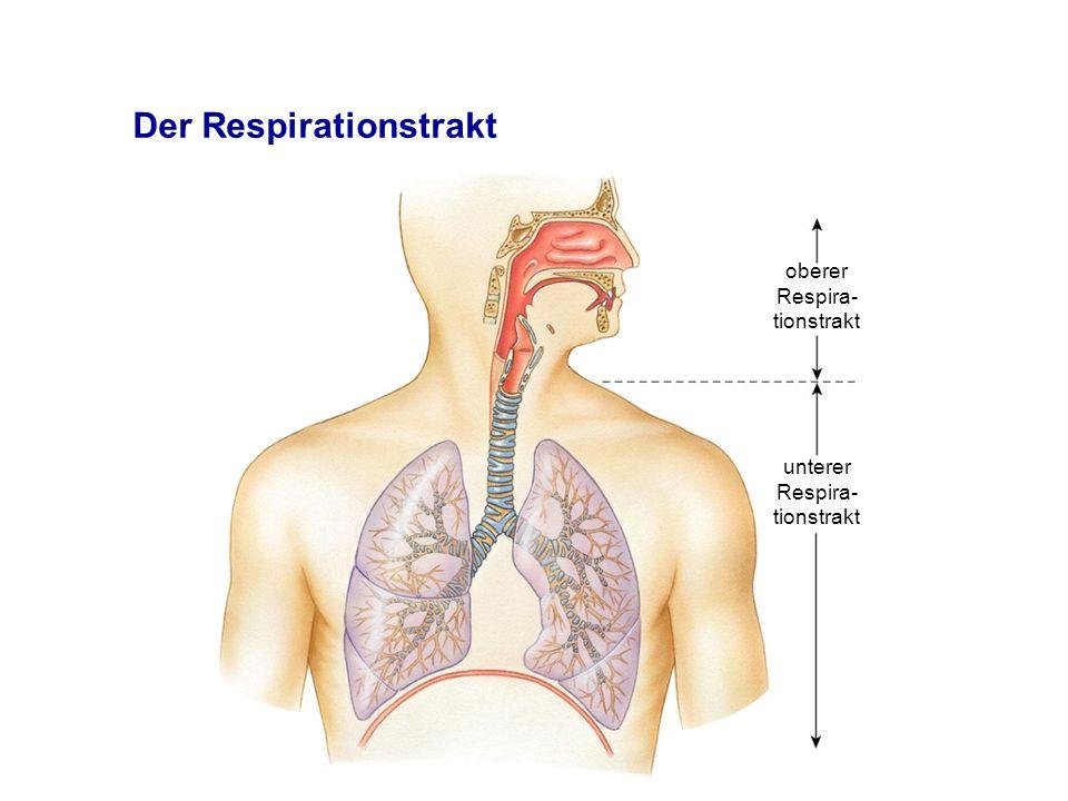Der Respirationstrakt