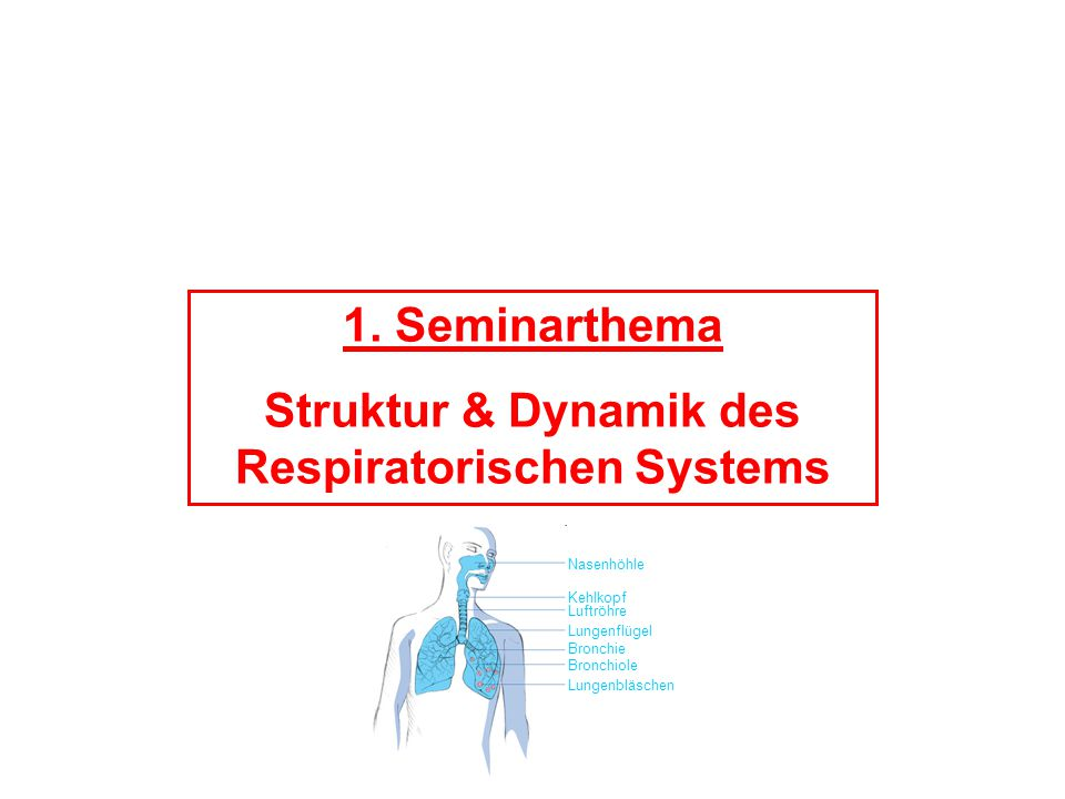 Struktur & Dynamik des Respiratorischen Systems