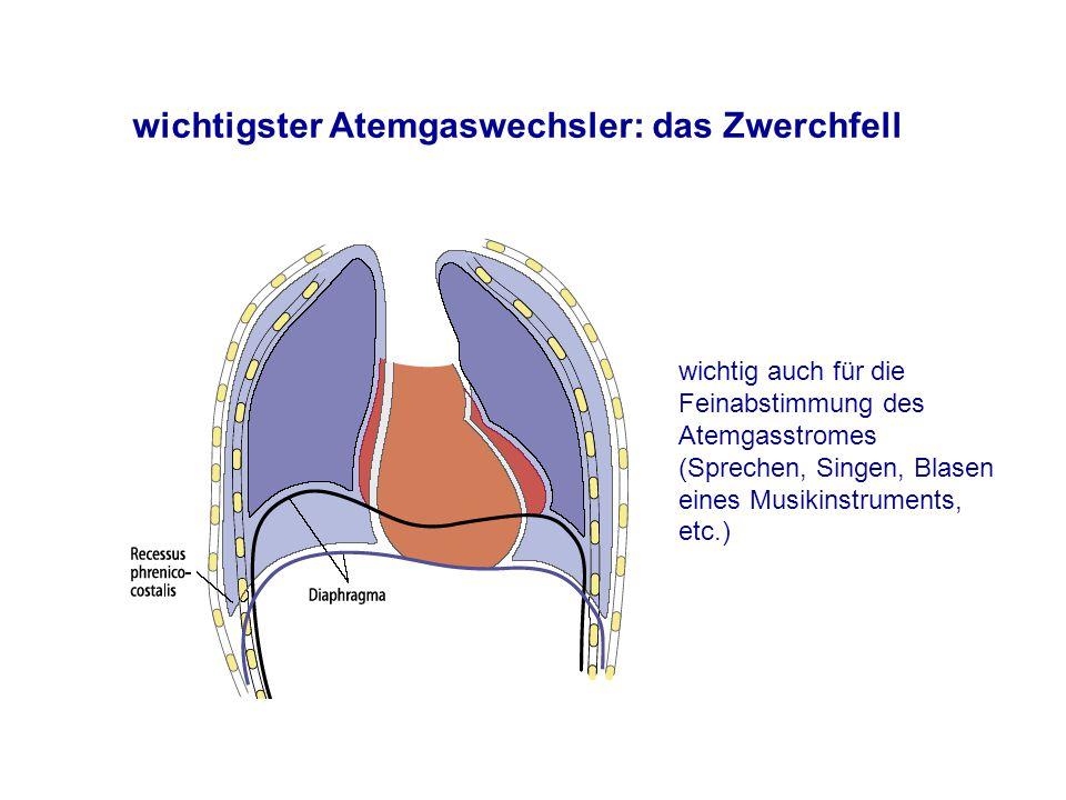 Großartig Was Ist Ein Zwerchfell Galerie - Elektrische Schaltplan ...