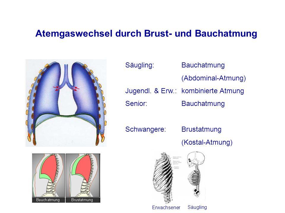 Atemgaswechsel durch Brust- und Bauchatmung