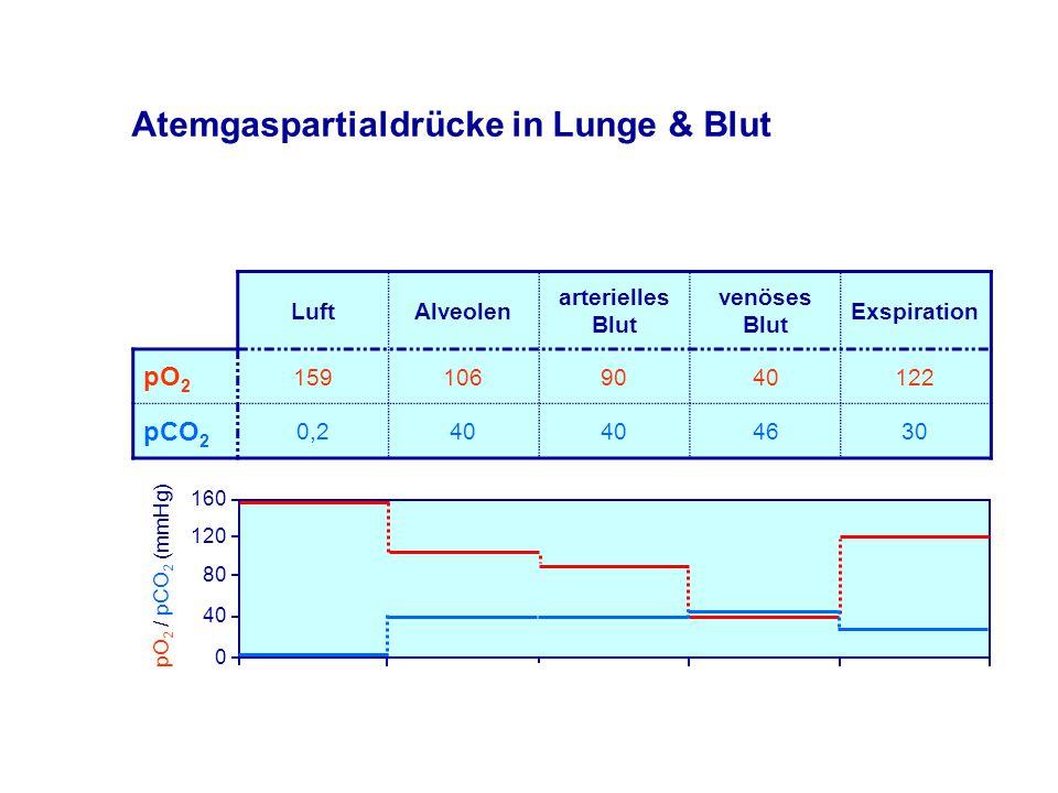 Atemgaspartialdrücke in Lunge & Blut