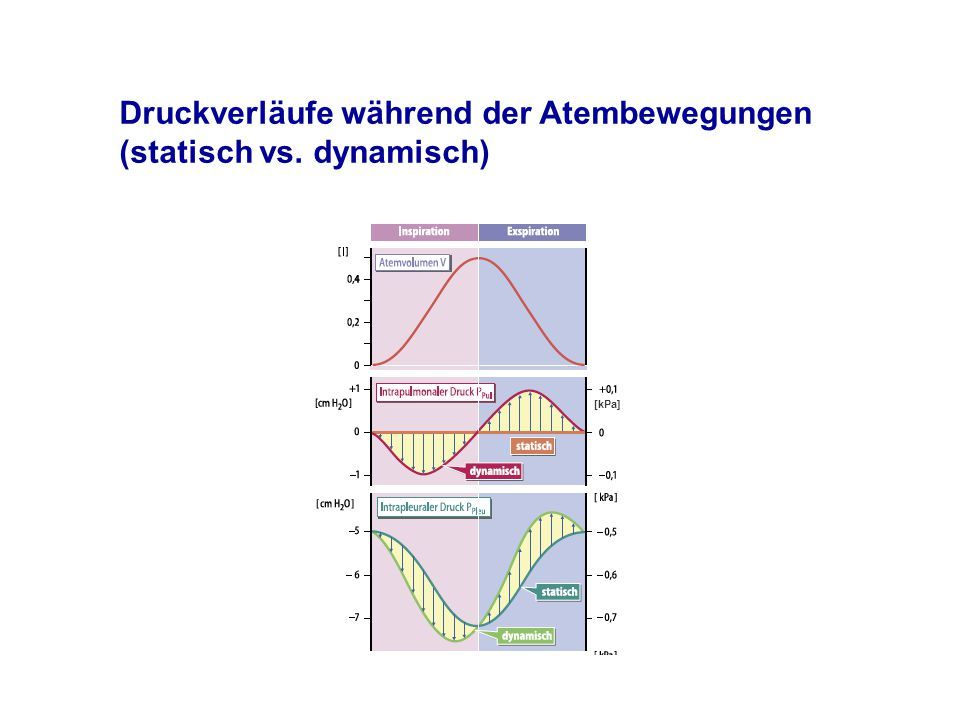 Druckverläufe während der Atembewegungen (statisch vs. dynamisch)