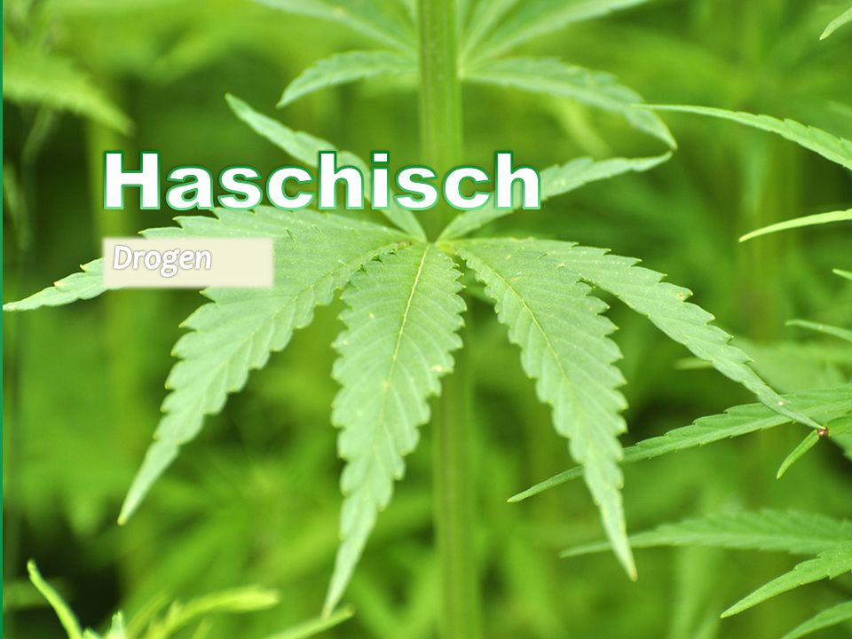 Haschisch Drogen