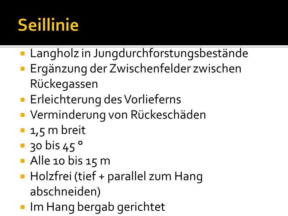 Seillinie Langholz in Jungdurchforstungsbestände