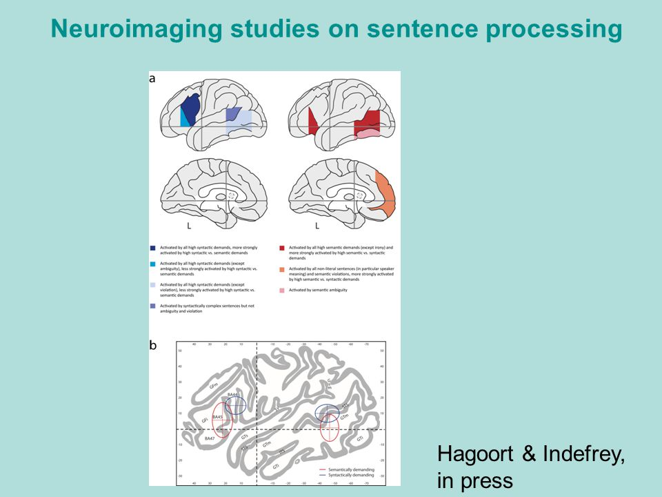 Neuroimaging studies on sentence processing
