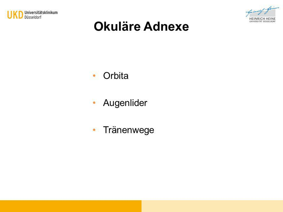 Okuläre Adnexe Orbita Augenlider Tränenwege