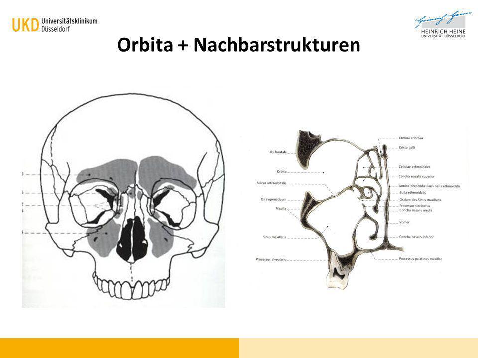 Orbita + Nachbarstrukturen