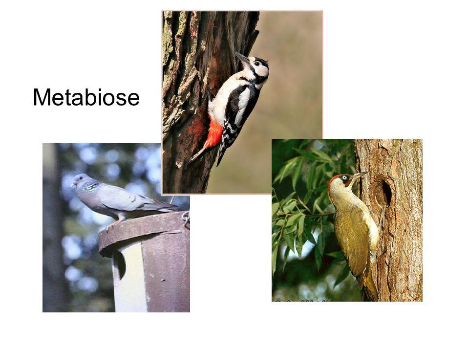 Metabiose