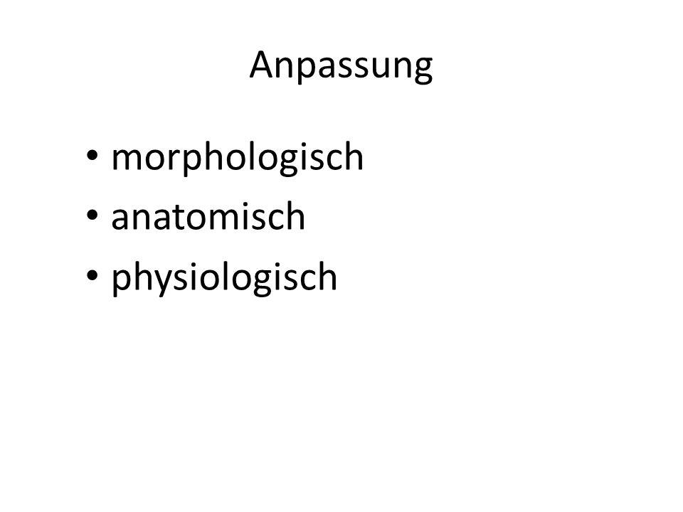 Anpassung morphologisch anatomisch physiologisch