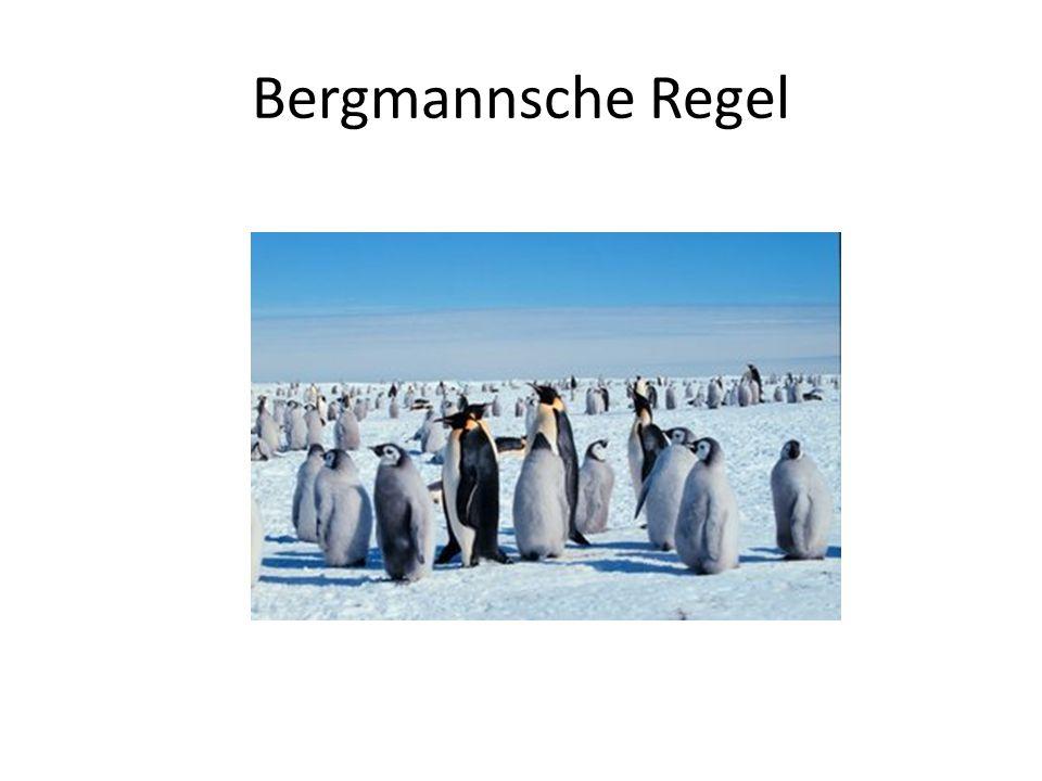 Bergmannsche Regel