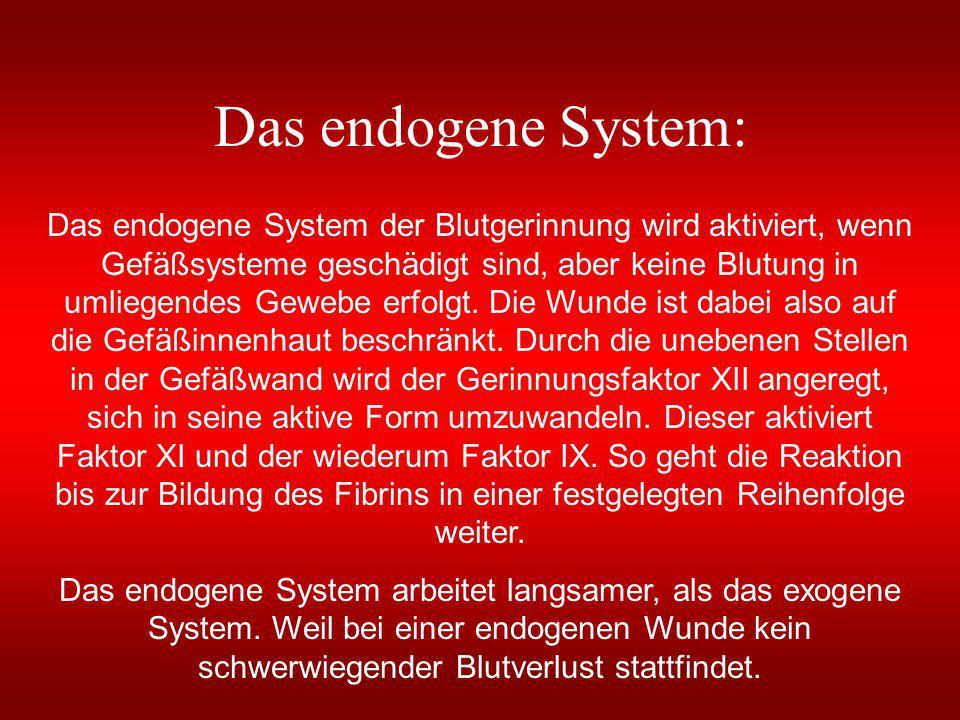 Das endogene System: