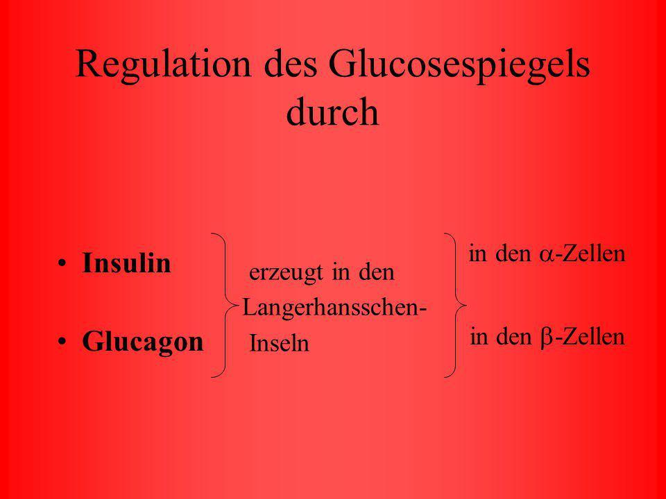 Regulation des Glucosespiegels durch