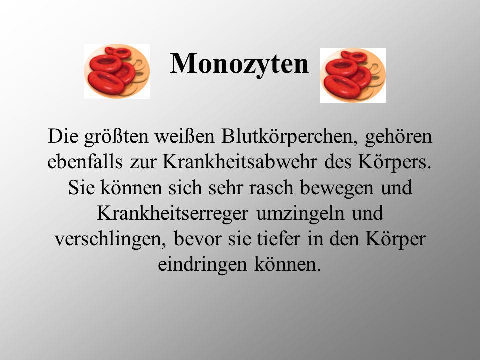 Monozyten