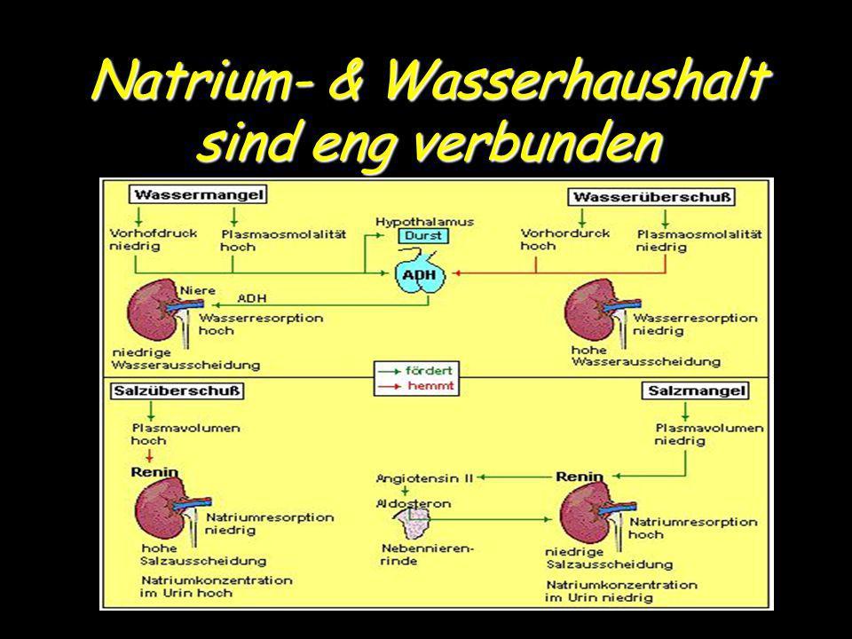 Natrium- & Wasserhaushalt sind eng verbunden