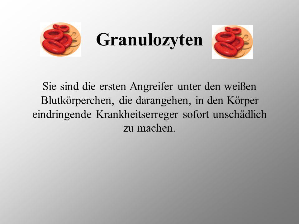 Granulozyten