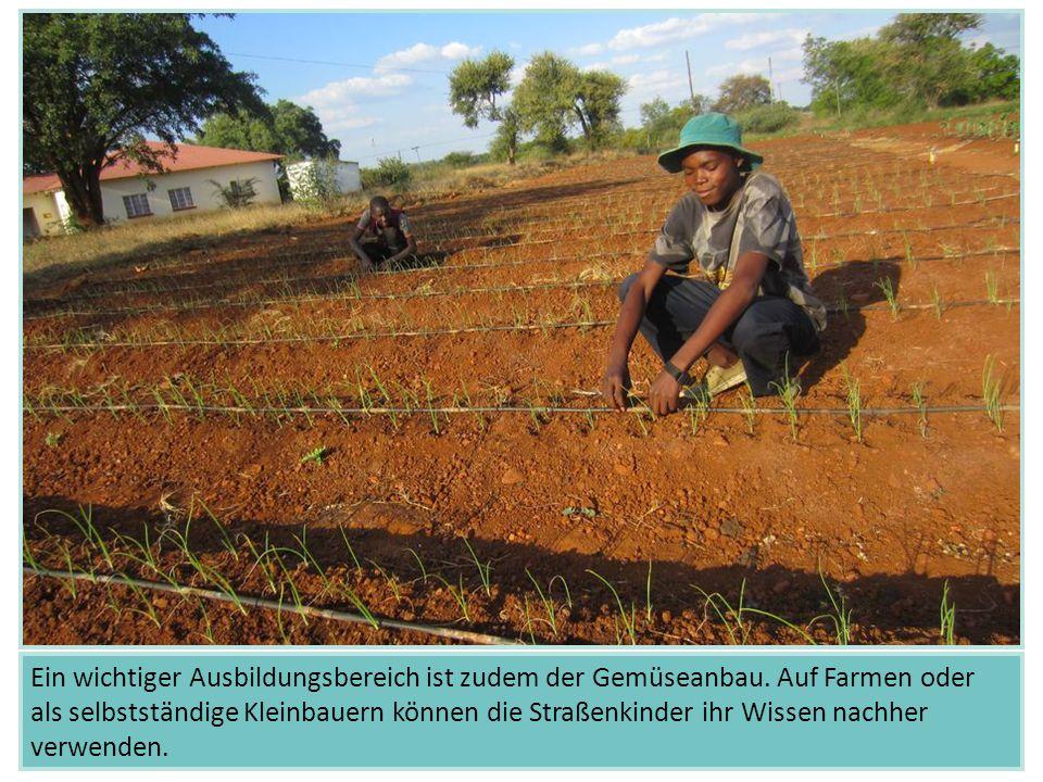 Ein wichtiger Ausbildungsbereich ist zudem der Gemüseanbau