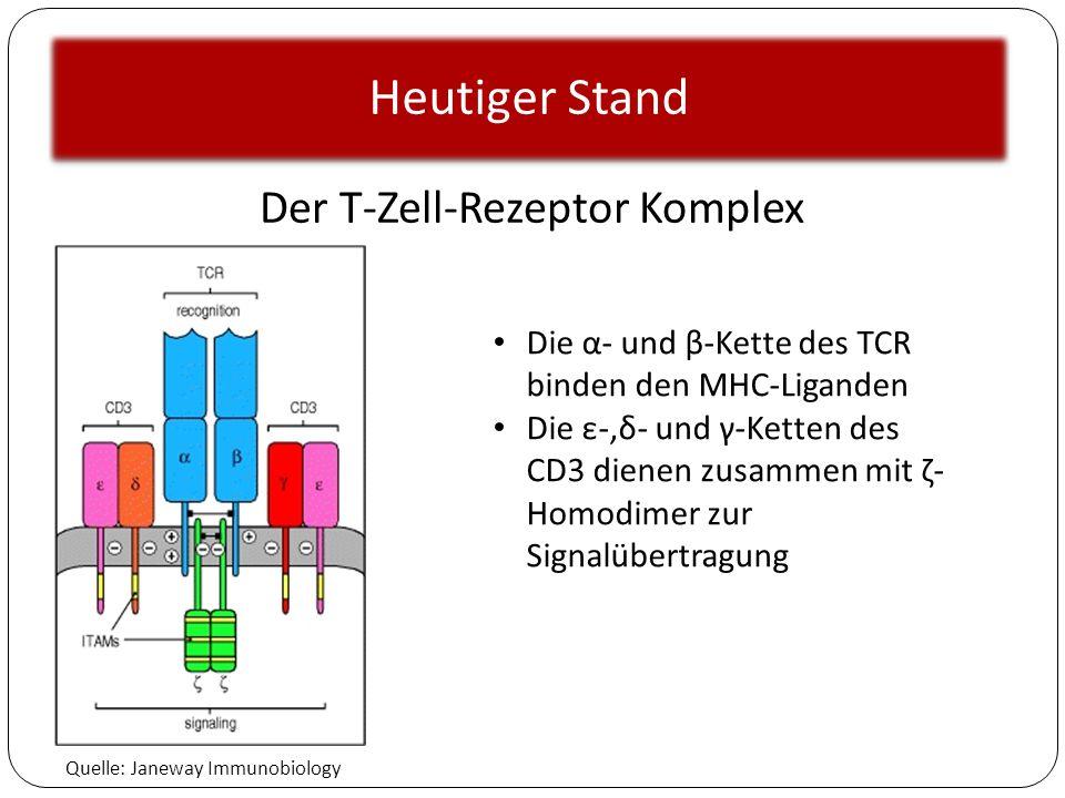 Der T-Zell-Rezeptor Komplex