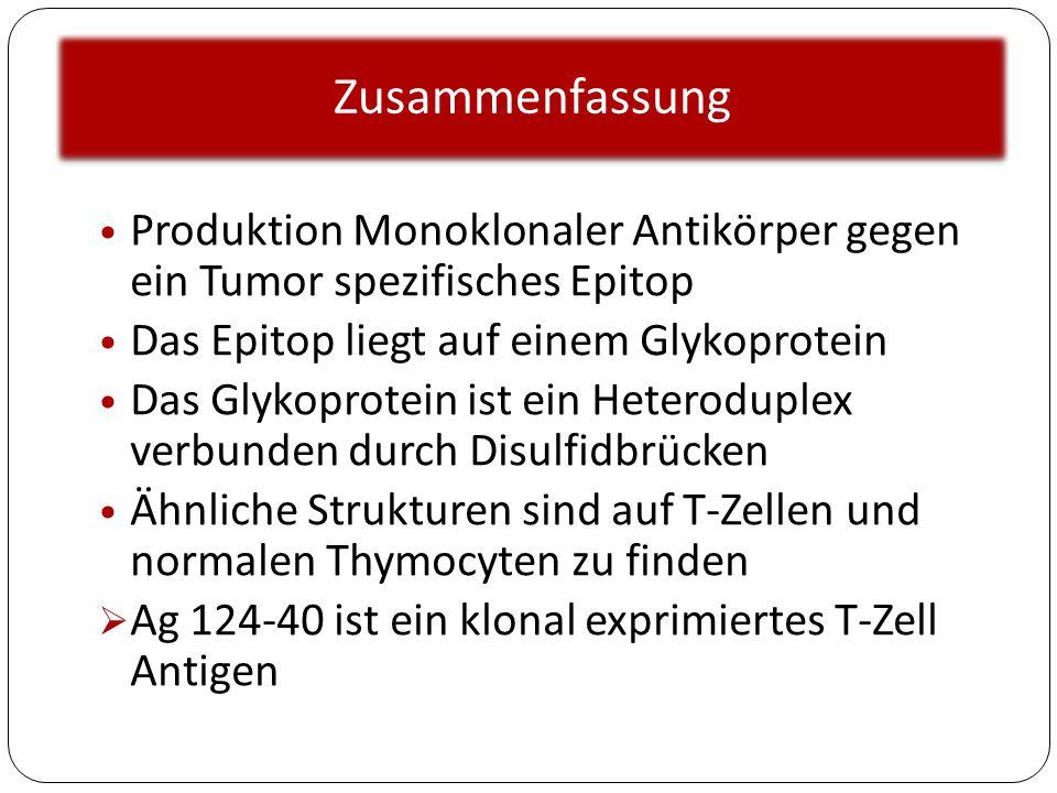 Zusammenfassung Produktion Monoklonaler Antikörper gegen ein Tumor spezifisches Epitop. Das Epitop liegt auf einem Glykoprotein.