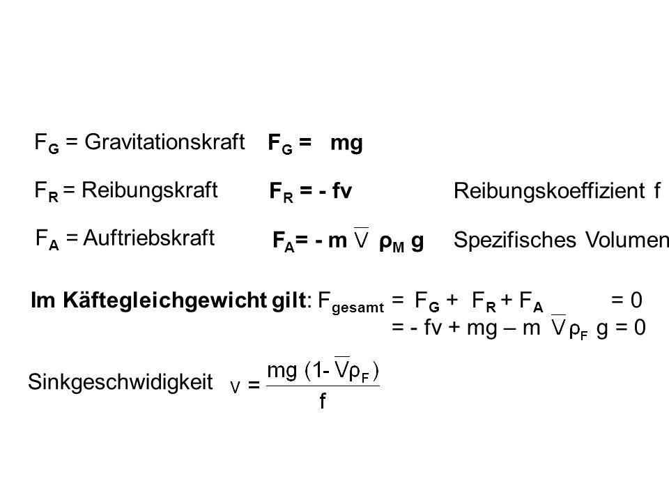 FR = Reibungskraft FG = Gravitationskraft. FA = Auftriebskraft. FA= - m ρM g. FR = - fv. FG = mg.