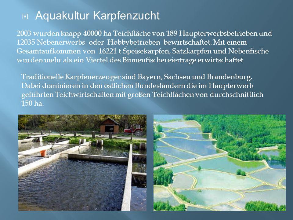 Aquakultur Karpfenzucht