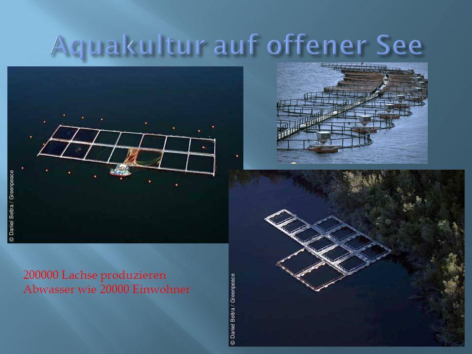 Aquakultur auf offener See