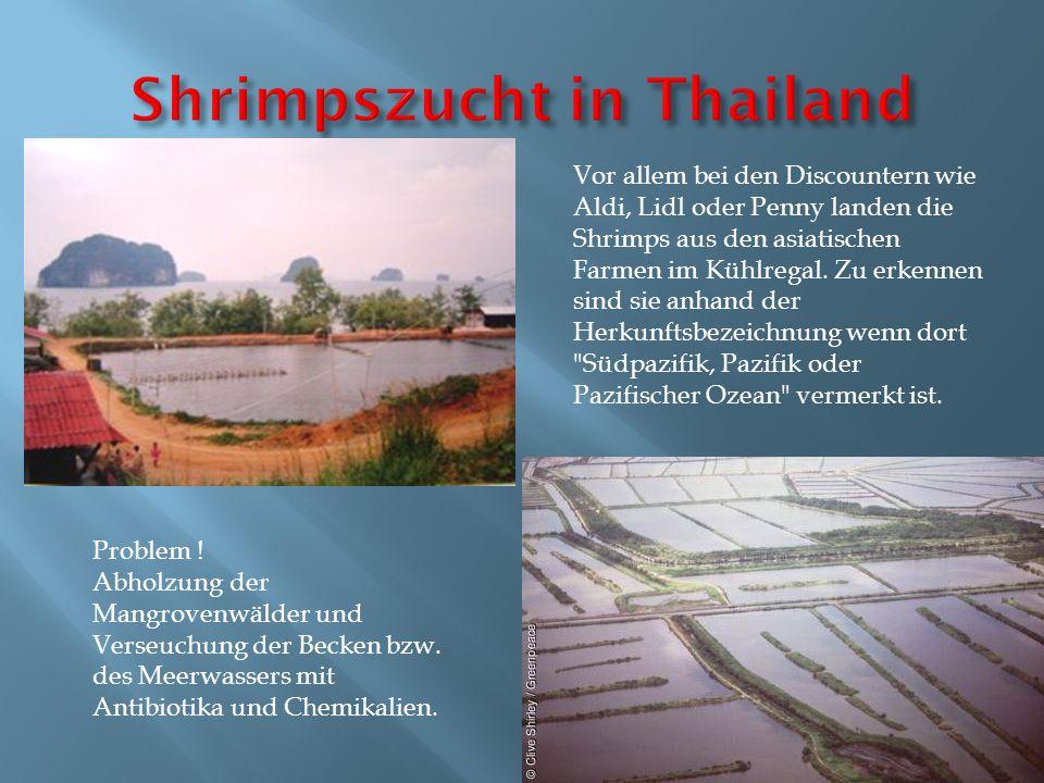 Shrimpszucht in Thailand