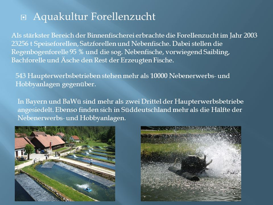 Aquakultur Forellenzucht
