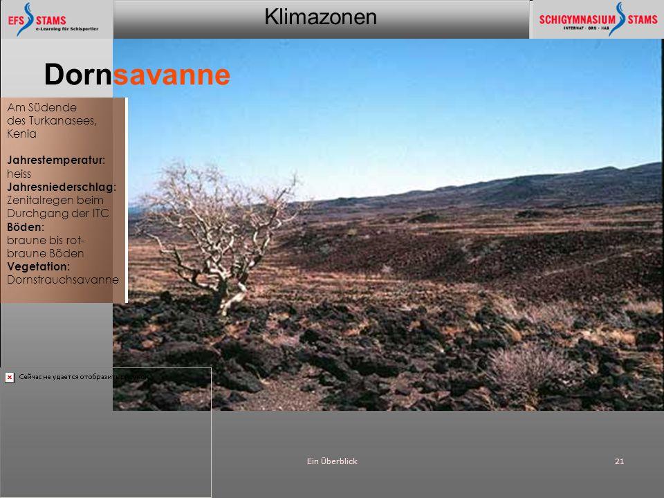 Dornsavanne Am Südende des Turkanasees, Kenia Jahrestemperatur: heiss
