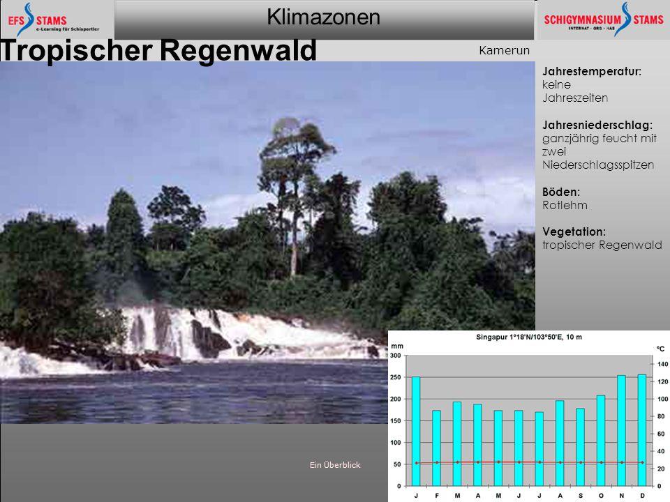 Tropischer Regenwald Kamerun Jahrestemperatur: keine Jahreszeiten