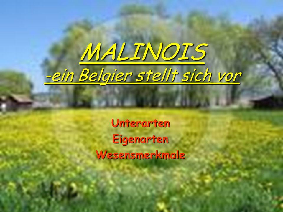 MALINOIS -ein Belgier stellt sich vor