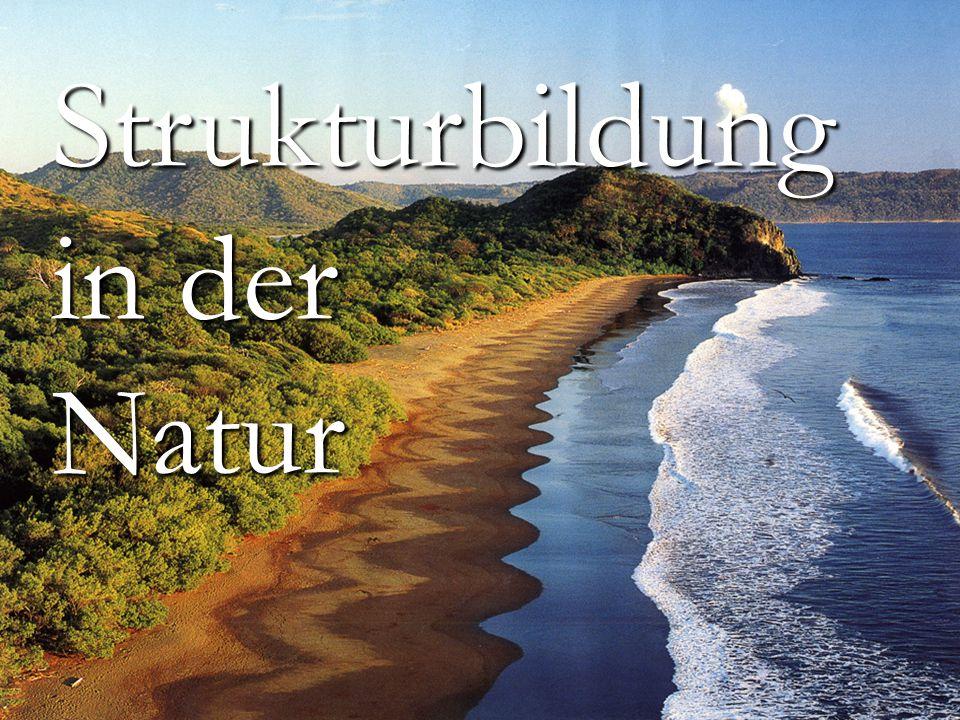 Strukturbildung in der Natur