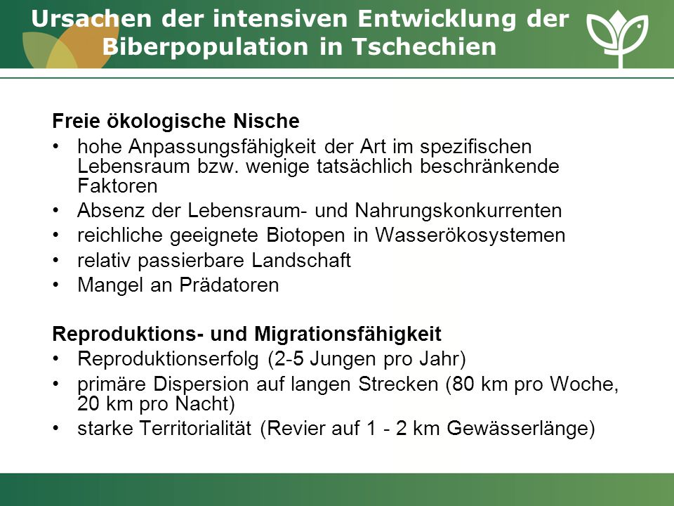 Ursachen der intensiven Entwicklung der Biberpopulation in Tschechien
