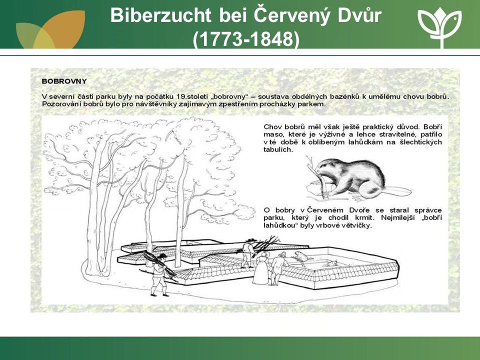 Biberzucht bei Červený Dvůr (1773-1848)