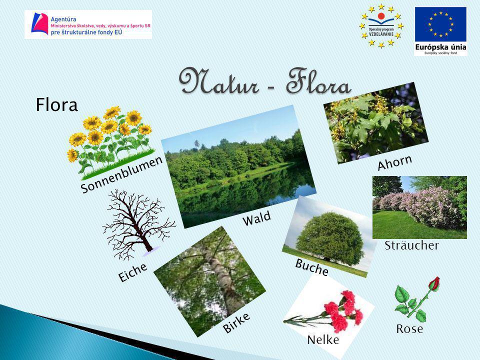 Natur - Flora Flora Ahorn Sonnenblumen Wald Sträucher Eiche Buche