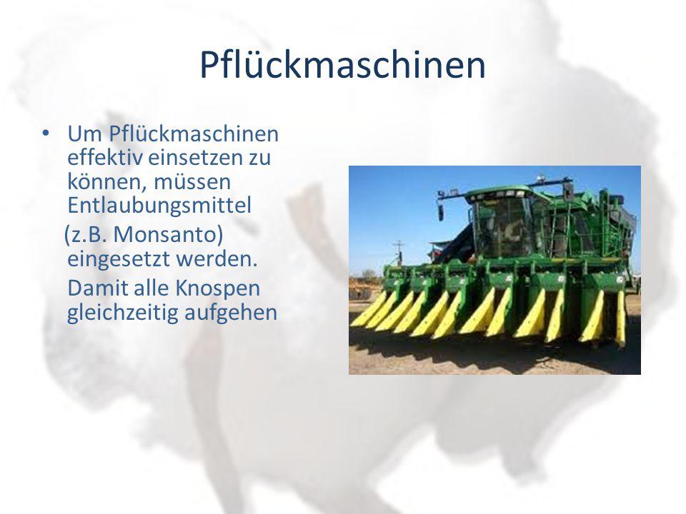 Pflückmaschinen Um Pflückmaschinen effektiv einsetzen zu können, müssen Entlaubungsmittel. (z.B. Monsanto) eingesetzt werden.