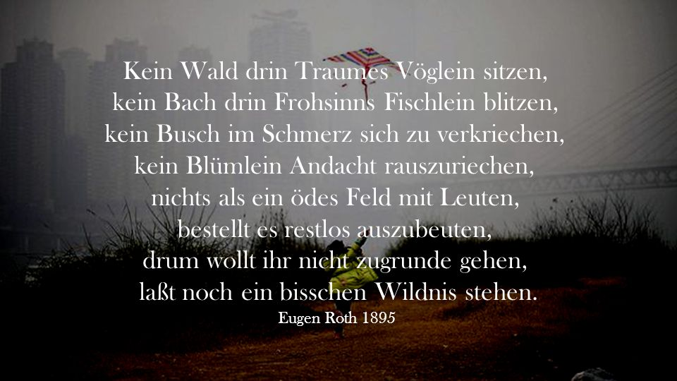 Kein Wald drin Traumes Vöglein sitzen,
