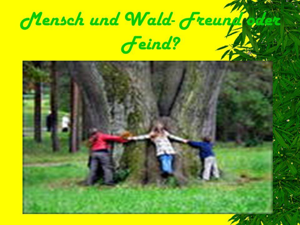 Mensch und Wald- Freund oder Feind
