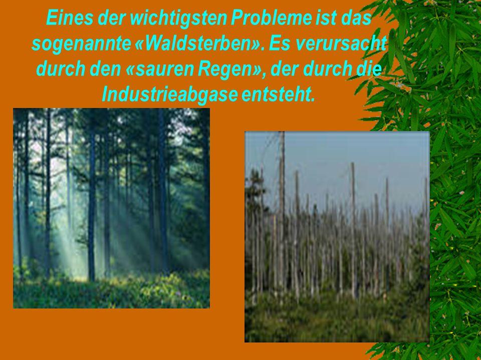 Eines der wichtigsten Probleme ist das sogenannte «Waldsterben»