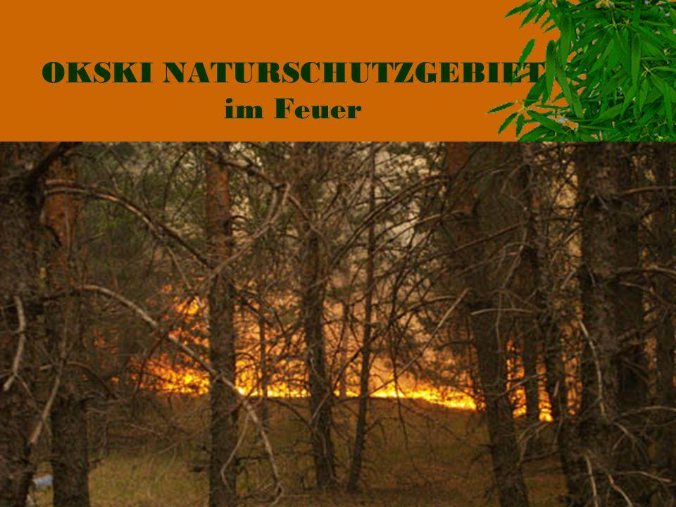 OKSKI NATURSCHUTZGEBIET im Feuer