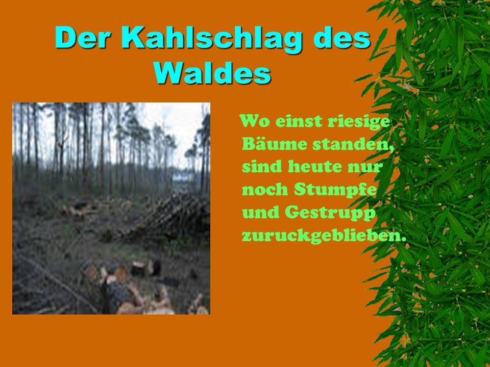 Der Kahlschlag des Waldes