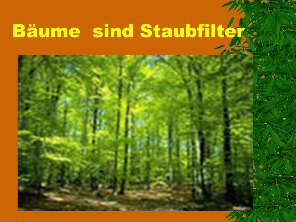 Bäume sind Staubfilter