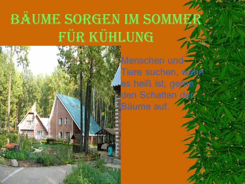 Bäume sorgen im Sommer für Kühlung