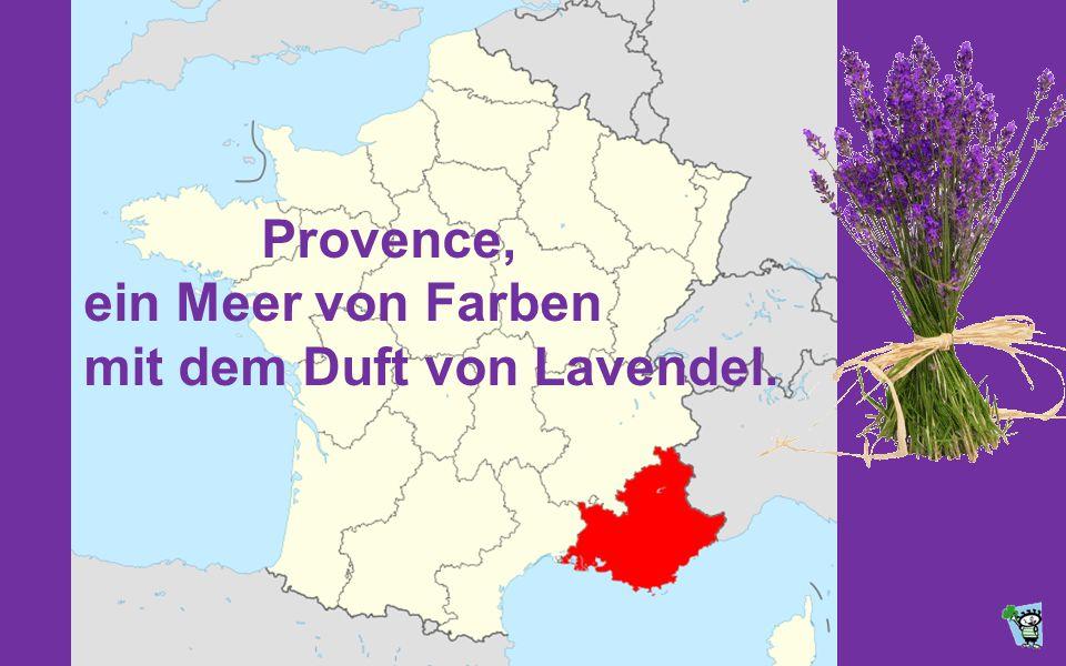 Provence, ein Meer von Farben mit dem Duft von Lavendel.
