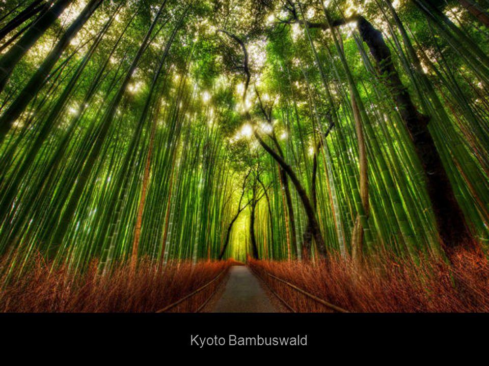 Kyoto Bambuswald