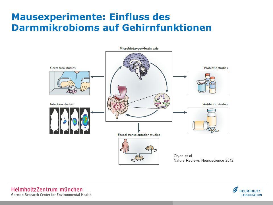 Mausexperimente: Einfluss des Darmmikrobioms auf Gehirnfunktionen
