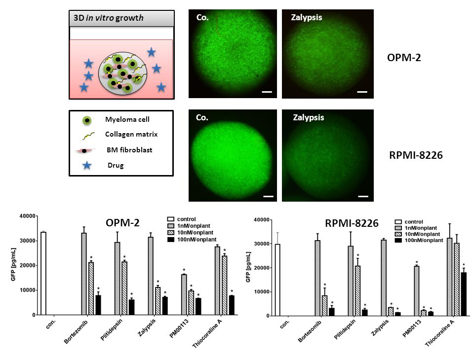 OPM-2 RPMI-8226 OPM-2 RPMI-8226 3D in vitro growth Co. Zalypsis Co.